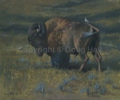 Buffalo by Doug Hall - 067 - 20x24