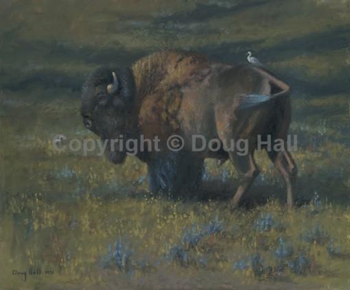 Buffalo by Doug Hall - 067 - 20x24